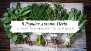 8 Popular Autumn Herbs & How They Benefit Your Health // andreadahlman.com