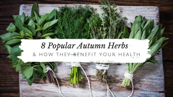 8 Popular Autumn Herbs & How They Benefit Your Health // andreadahlman.com