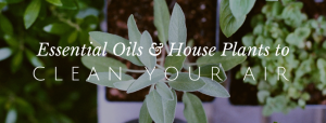8 Plants and Essential Oils that Clean the Air // redeemingnutrition.com